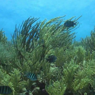Soft corals in Mexixo