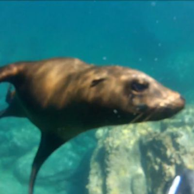 A seal up close in Mexico