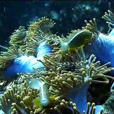 Soft corals in Thailand