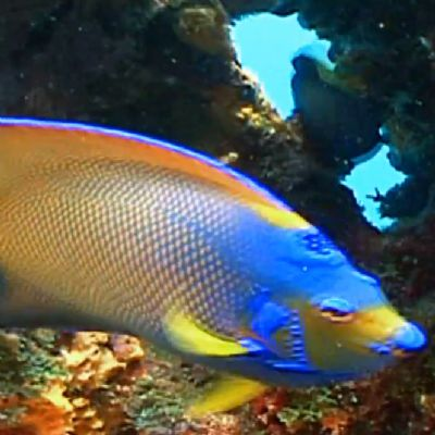 A Colorful fish in USA