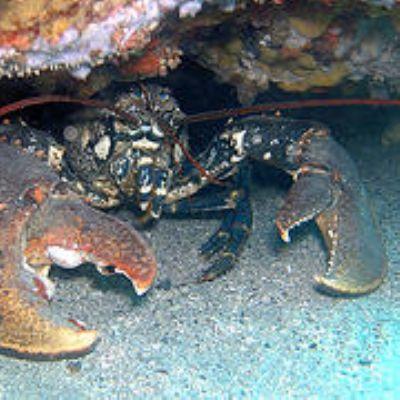 A lobster in Spain