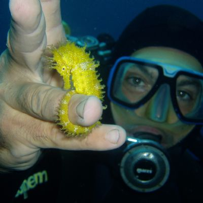 Diver holding a seahorse in Italy